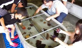 さかなの未来を科学する/東北区水産研で一般公開