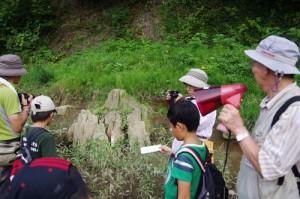 ④約350万年前の噴火によって埋まった森林跡(立木の化石)
