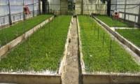 【研究所訪問】抵抗性クロマツや花粉症対策スギの種苗が生まれる故郷